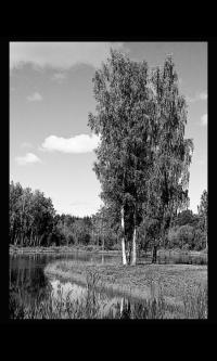 Пейзаж № 7